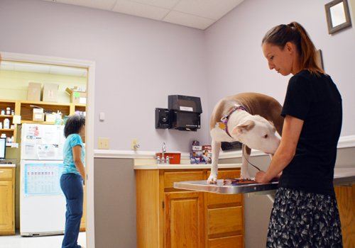 Dog In Veterinary Examination Room