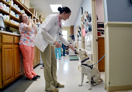 Veterinarian with Canine